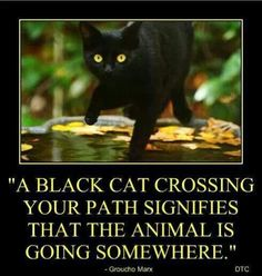 :) as simple as that. And by the way, black cats, in reality, bring abundance and blessings.