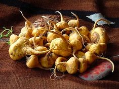 health benefits of maca, uses of maca...https://www.fiverr.com/healthy_guru