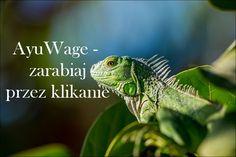Lizard, iguana, garden and plant HD photo by John Cobb ( on Unsplash Reptiles, Mammals, Lizards, Chameleons, Iguana Care, Green Iguana, Free High Resolution Photos, Nature Hd, Epic Fail Pictures