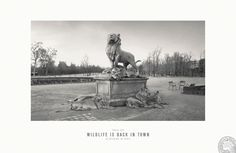 Paris Zoo: Wildlife is Back in Town | Zoo Photographs Advertising Campaign | Award-winning Press Advertising Campaigns | D&AD