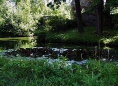 Meiningen: Seerosen im Englischen Garten