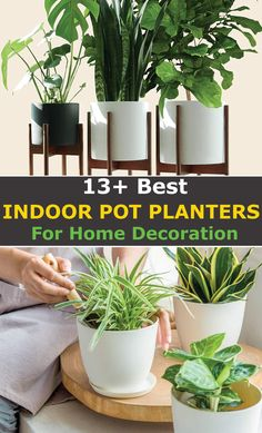 Are you looking for the best indoor pot planters for your home decoration? Look no further: Here's a complete list of top planters that will make your plants to stand out as they should. What's more? All our recommendations will fit any budget. Starting from $4 and all under $100, you can accessorize interiors without any hassle or breaking the bank. Let's begin. #Planters #GardenPlanters #PlantPots #HomeDecor #HomeAccessories #GardenPots #IndoorPlantPots #IndoorPlanters Raised Garden Planters, Garden Pots, Planter Pots, Indoor Plant Pots, Indoor Planters, Container Gardening, Gardening Tips, Growing Vegetables In Pots, Halloween Wood Crafts
