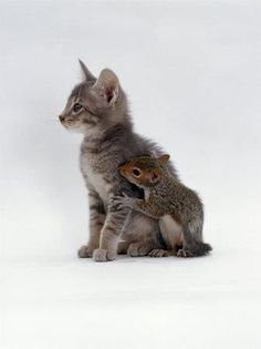 Unusual friendships: A kitten and a squirrel.