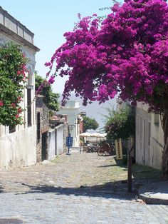 Uruguay - walked down this very street. Such a beautiful town and wouldn't mind living there. Beautiful Places In The World, What A Wonderful World, Great Places, Places To See, Places Ive Been, South America Destinations, Holiday Destinations, Travel Destinations, Travel Souvenirs