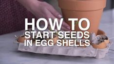 Give seeds a happy starter home by planting them in recycled eggshells.