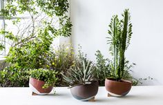 'The Lazy Season' handmade planters – a collaboration between Sydney ceramicists The Fortynine Studio and The Planthunter. Photo – Daniel Shipp.