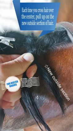 FRUSTRATED WITH LOOSE MANE BRAIDS? LEARN HOW YOU CAN AVOID THEM Are you unwittingly making some mane braiding mistakes that are detracting from your horse's turnout? This is the second post in my three part series where I'm sharing some tips on Mane Braiding Mistakes and how to you can avoid them. Here are the links to other post so you can …
