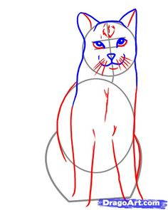 how to draw a realistic cat step 12