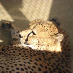Pic from a cheetah run I did a few years ago