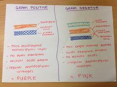 Gram + vs Gram -