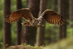 Flying through forest -