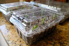 Plastic berry containers, like the ones you get from the produce section at the grocery store, make great places to start flowers from seed.