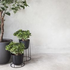Shop AllModern for Menu Round Pot Planter - Great Deals on all  products with the best selection to choose from!