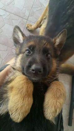 I want dogs so baaddddhttps://i.imgur.com/yjBK5Pi.gifv