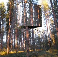 Swedish designed tree house, 'Harads', with glass walls and surfaces that reflect surroundings.