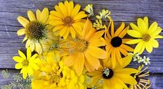 Add a little sunshine to your garden with yellow perennial flowers. Discover a few plants that will brighten up a spring, summer, and fall garden. Yellow Flowering Plants, Yellow Perennials, Flowers Perennials, Planting Flowers, Yard Landscaping, Landscaping Design, Good Day Sunshine, Garden Landscape Design