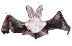 CHARLOTTE LINTON - Ermantrude's Travels, Bat