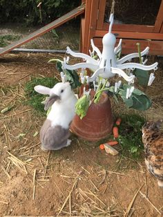Employment for the knocker with a small rotary dryer from Ikea for €. # Rabbit # ikea-spider # employment - All About Gardens Rabbit Run, Rabbit Toys, Pet Rabbit, Pet Chickens, Chickens Backyard, Rabbit Playground, Ikea, Diy Bunny Toys, Rabbit Enclosure