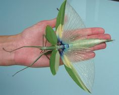 praying mantis wings, delicate and beautiful