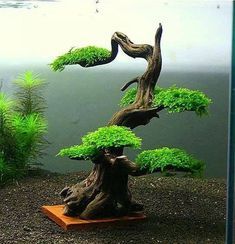 bonsai - very nicely styled`