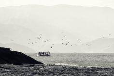 embarcação de pesca