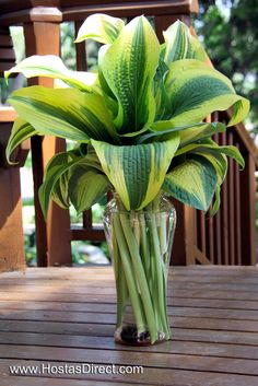 Tall hosta leaves make for excellent floral arrangement greens - no flowers needed!