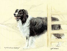 BORDER COLLIE SHEEPDOG FINE ART MOUNTED LIMITED EDITION PRINT BY GILL EVANS