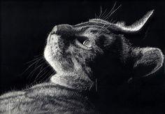 scratchboard art | Wildlife art : Scratchboard : Irfan Ahmed : Artist : Scotland