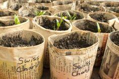 Homemade newspaper plant pots.