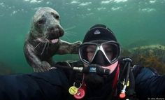 We're assuming that this guy was attempting to take an underwater selfie.    125 Animal Photobombs