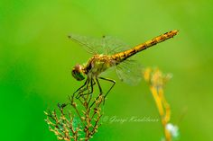 Dragonfly by George Kandilarov on 500px