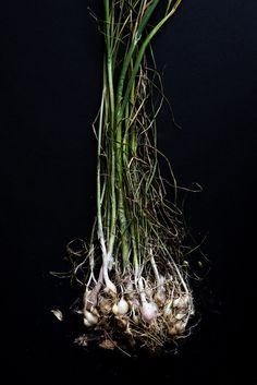 whitney ott, whitney ott photography, photography, food, food photography, wild onions, dark