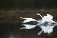 Taking off by © Ingrid Fotografie via ingridfotografie.nl