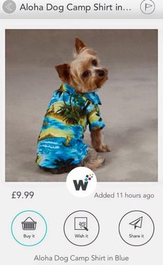 Dog shirt - don't you just love it!