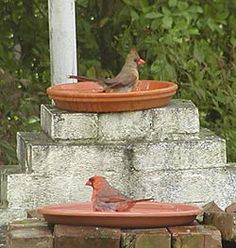 What to Feed Birds ~ What will attract the birds you want & recipes for hummingbird & oriole nectars.