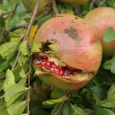 Zesty Pomegranate Vinaigrette Dressing