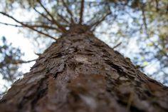 Growing up   #color  #Light  #composition  #Dramatic  #Amazing  #moment  #Closeup  #bokeh  #tree  #Macro  #mothernature  #delicate  #Naturephotography  #withimpact  #neverstopexploring  #Pure  #travel  #explore   #Worldprime  #summer  #beautiful  #enchanting  #upclose  #photoart  #Blooms  #saturation  #naturelovers  #wanderlust  #woods   #bark