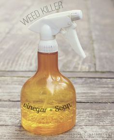 Natural weed killer: 2c white vinegar + 1T dish soap + 1T. salt. Blend and pour into a spray bottle. Will kill anything!