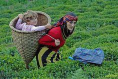 woman in garden, Blacksea Region, Turkey