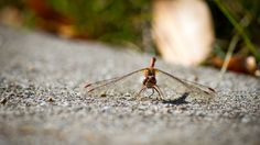 dragon Fly by Ben Cobb on 500px