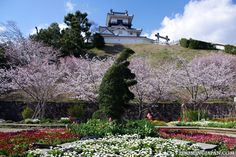 Photo of the week (5/52):  Spring is not far! 🌸💕   Beautiful Kakegawa Castle in Shizuoka Prefecture: http://zoomingjapan.com/travel/kakegawa-castle/