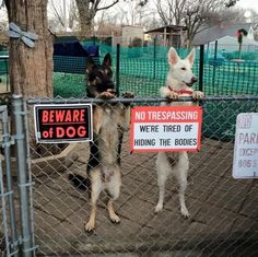 Beware Of Dog Signs You Can Probably Just Ignore Pics Cute - 18 ferocious dogs posing beside their beware of dog signs