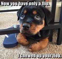 Awe! Lol, that's ok little guy!