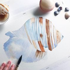 A new seashell study is underway today. This is a Tonna Sulcosa 😊🐚🐟 #shell #oceanlover #artfollow #artdaily #artist_insta #nautical #featuring_art #mystudio #seashell #beach #beachdecor #beachlover #sea #watercolor #waterblog #watercolour #watercolorpainting #watercolorartist #aquarelle #aquarellepainting #artdaily #artdiscovered #artfollow #nautical