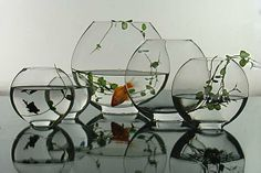 Cool Betta Fish Bowls | Fish Glass Bowl - smart reviews on cool stuff.