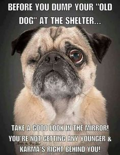 by homeward_bound_pug_rescue Pug Quotes, Animal Quotes, Poster Quotes, Animal Memes, Life Quotes, Animals And Pets, Funny Animals, Cute Animals, Pug Love