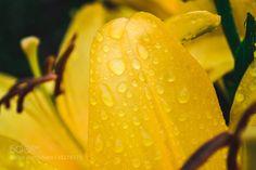 flower by kos95