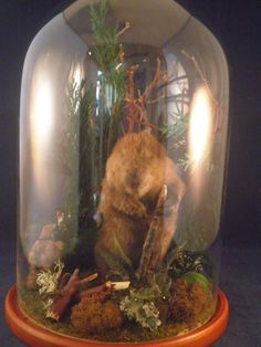 The Beaver comes with well made (preserved) wasps and butterfly https://www.etsy.com/listing/219161062/antique-victorian-inspired-taxidermy