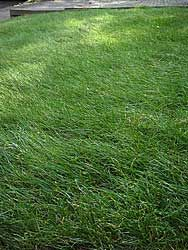 lawns of all types  to be in the  know