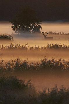 stag by Fabian Geist